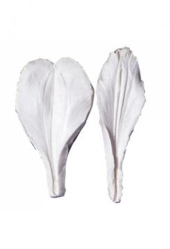 Alstroemeria Blatt 5,5cm